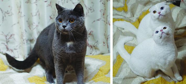 03_cats_01